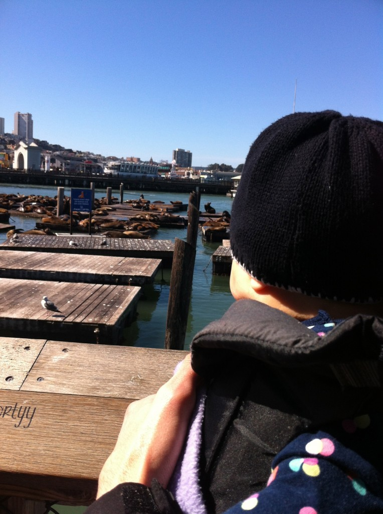 nola checking out the sea lions!